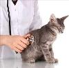 Ветеринарные клиники в Кумылженской
